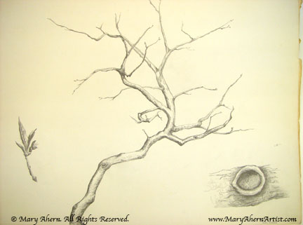 Branch with details, an early horticultural drawing