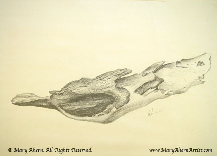 Drawing of a dead branch