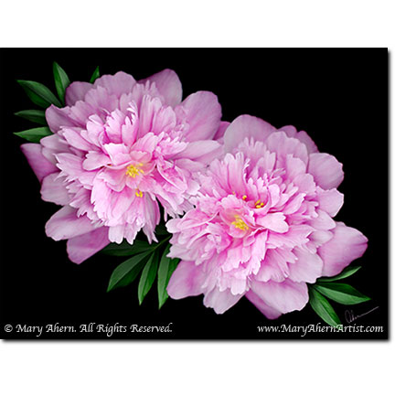 """Kansas Peonies"" Designer Prints 8x10 or 11x14. Larger sizes available."