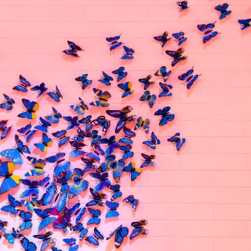 Butterflies, Anxiety, and Sensory Overload