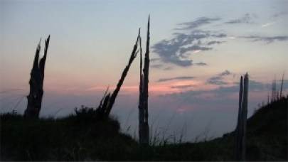 Ghost forest on South Manitou Island, Michigan