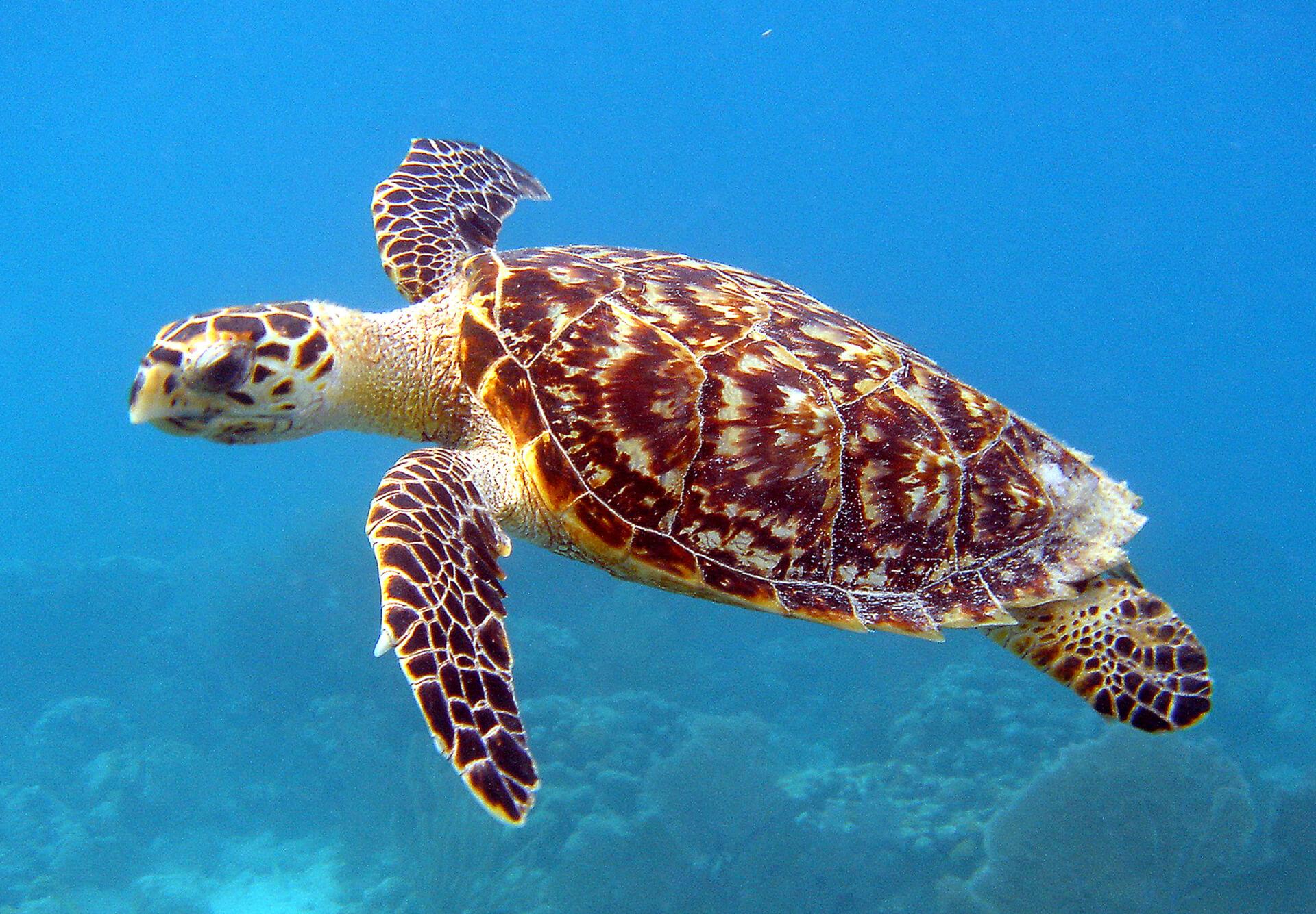 Endangered Species to Get a Reprieve Under Biden Administration Plans