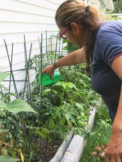 Ana Laura Garcia waters neighbor Berta Bonilla's plants using rainwater collected in a barrel. Garcia heads a tenant association formed to push back against the hike in water services at Middlebrook Mobile Homes in Germantown. Photo by Rosanne Skirble.