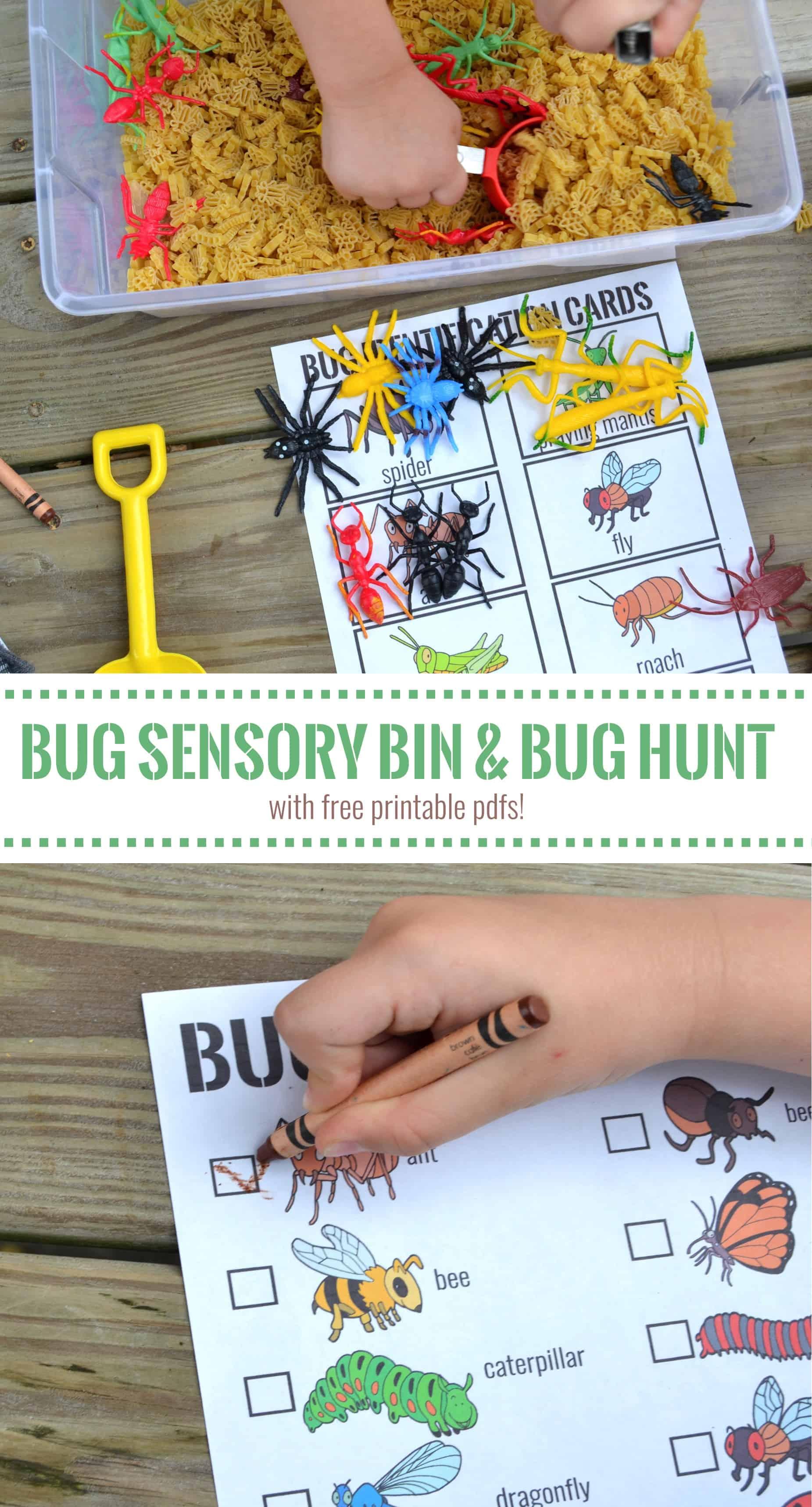 Bug Sensory Bin Amp Bug Hunt Printable Mary Martha Mama