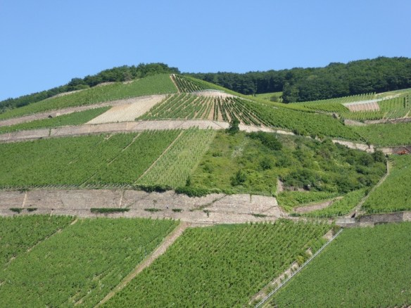 Wineries in the Mosel Valley
