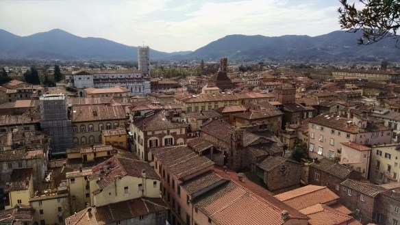 View of Lucca from the top of the GuinigiTower (courtesy of Sarah)