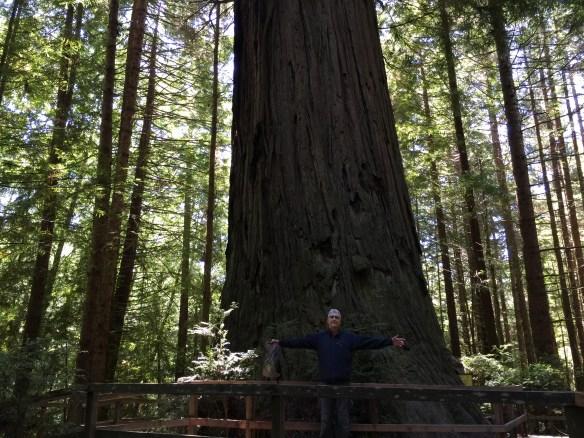 Tiny John, big tree
