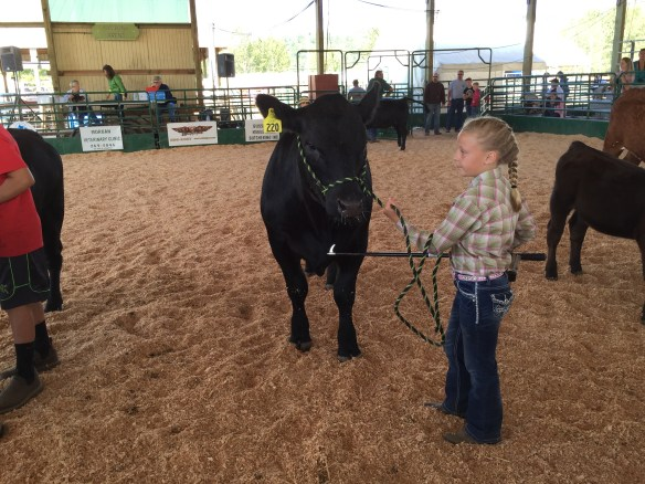 Our favorite little girl and her cow. She has very good control and her French braid is best-in-show
