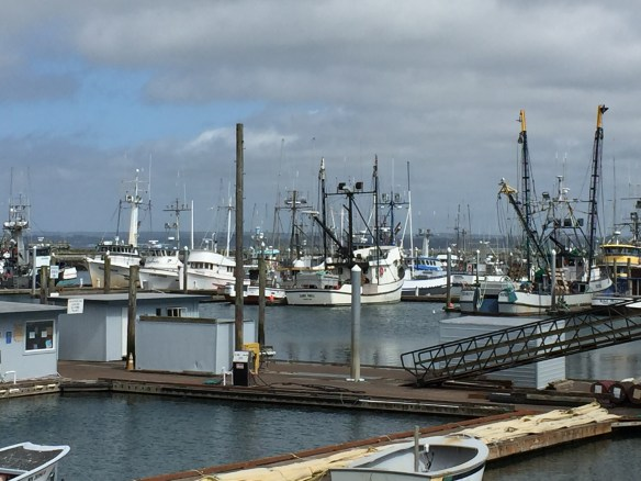 Commercial fishing boats in the Westport Marina