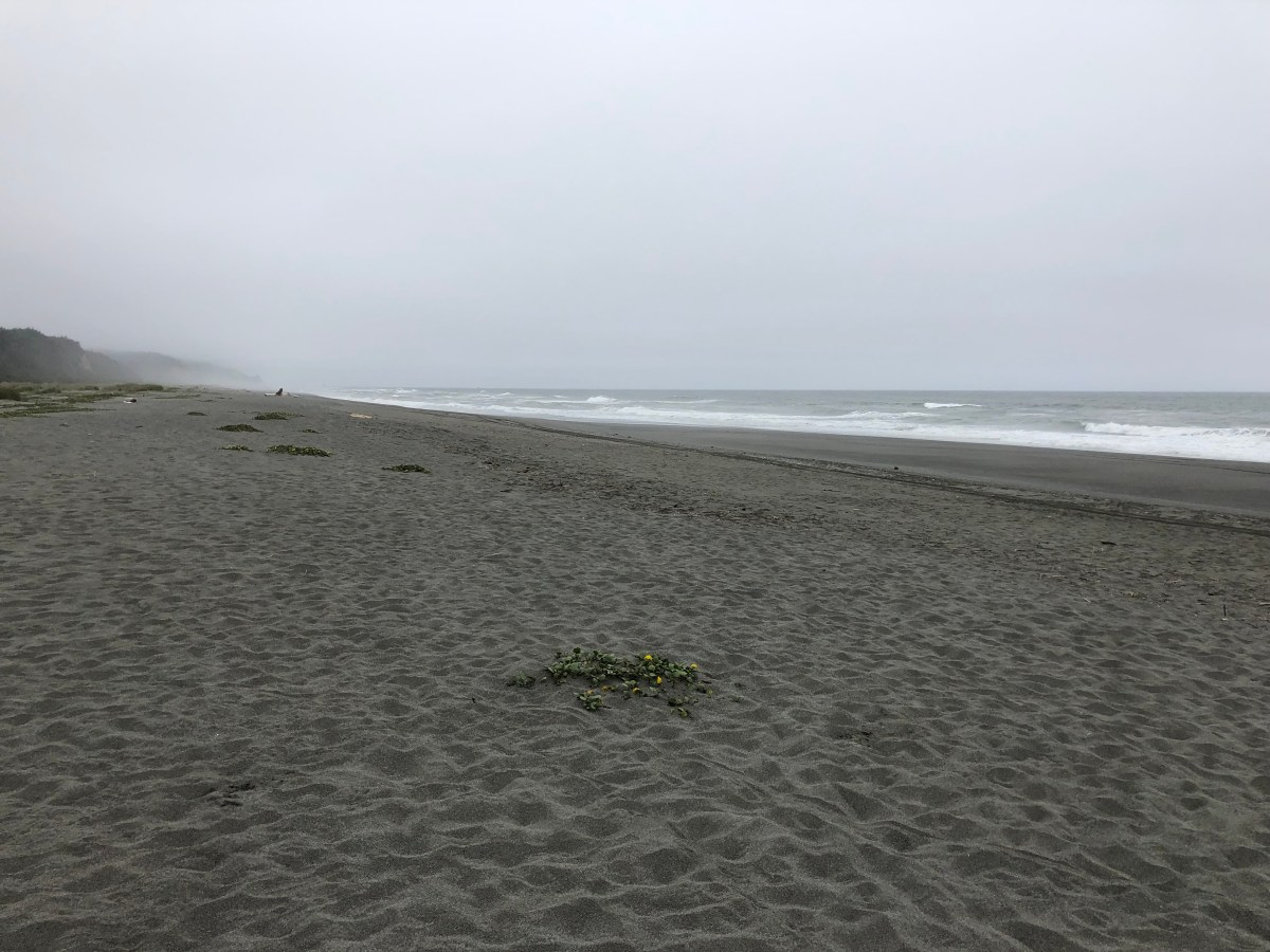More fun on the NorCal coast. 6/14/19