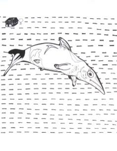 """Ichthyosaurus // 14"""" x 11"""""""
