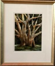 Moreton Bay Fig by Dawn Lewis