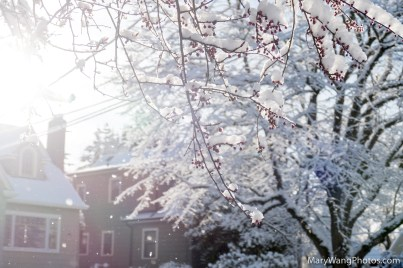 Tree with flower buds covered in snow