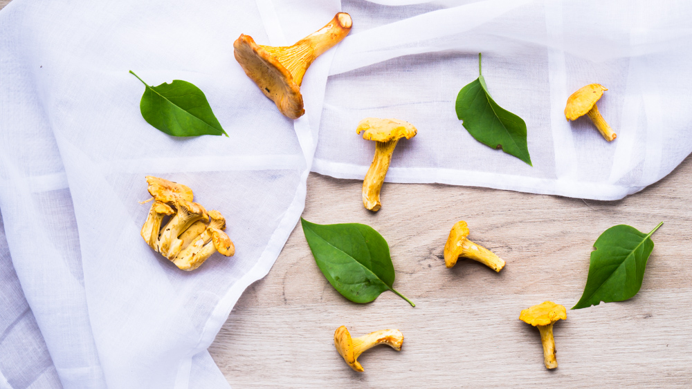 finferli_chanterelle_mushrooms