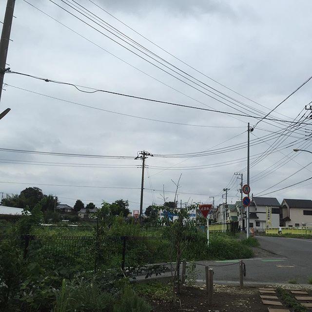 夕方になって来たら、曇ってきて涼しくなって来たよ。明日は祭りなのに、ちょっと雨マークが出て来ちゃった。