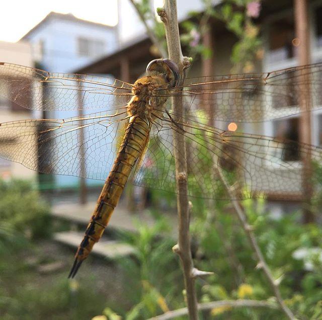 そして蜻蛉