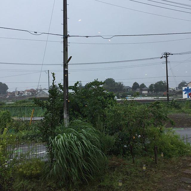 結構な雷雨で嵐。