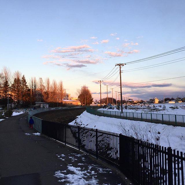 夕陽に映える銀杏。 今日も日没の時間。