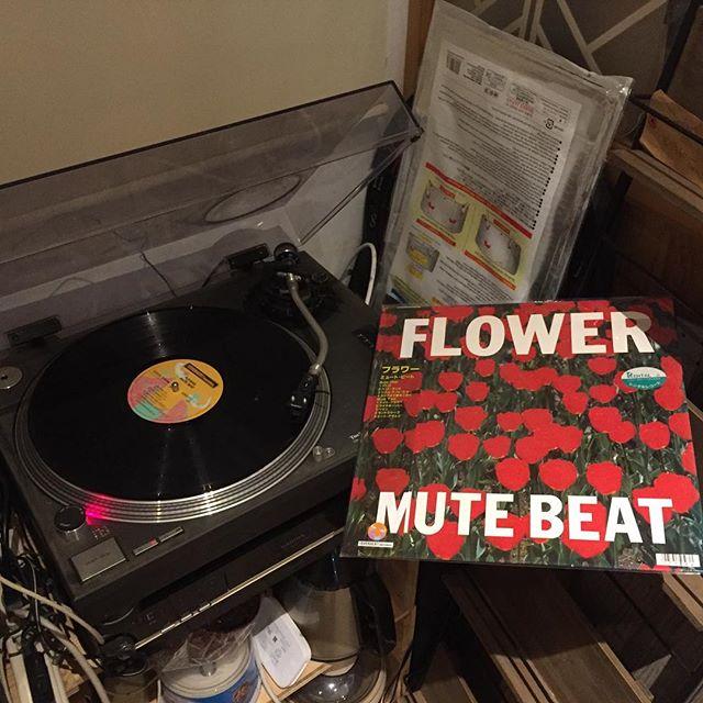某店のオーナーシェフとレコードの話をしたので。  ふと思い出してMUTE BEAT のFLOWER をまったりと聞く。 まだまだ知らない事だらけだ。