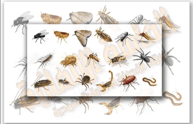 شركة مكافحة حشرات بمدينة جدة