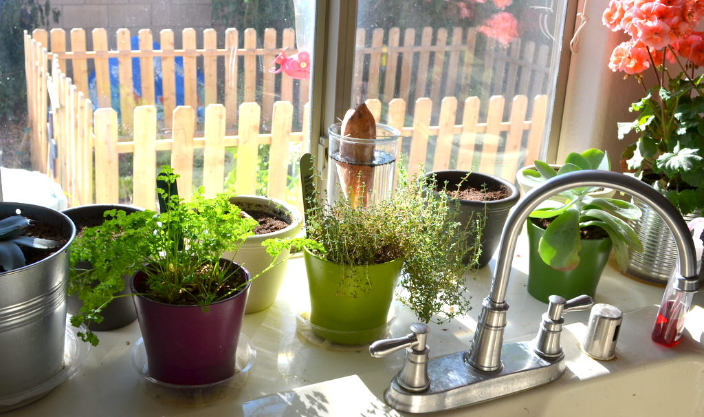 Herbs Plants for kitchen