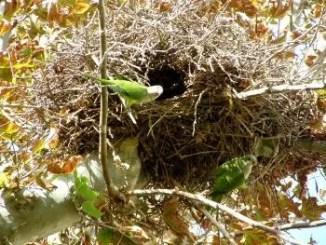 Distintos tipos de nidos de aves