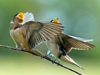 Identificar las Aves por su Canto