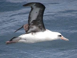 Información general sobre las Aves Marinas