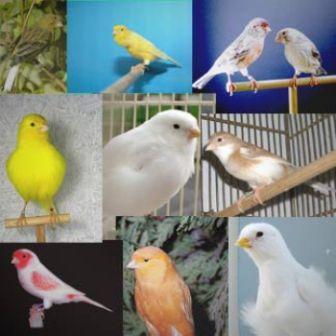 Por qué las aves son de distintos colores