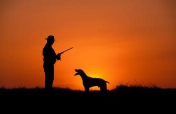 foto de perros de caza - madriguera