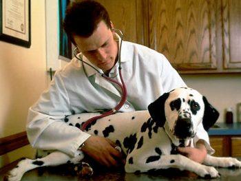 Salud y emergencias cuando viaja con su mascota