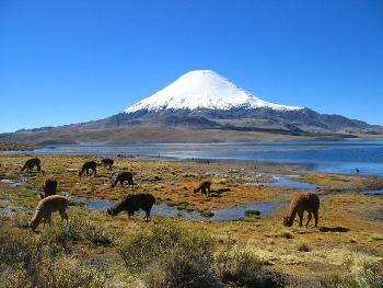 Fauna Chilena por Regiones