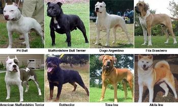Ley de razas de perros peligrosos