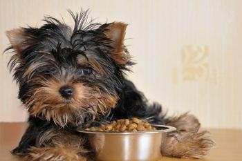 Tipo de Alimentos Para Perros