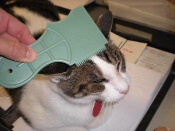 Como Cuidar el Pelo del Gato