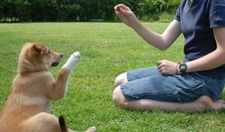 Diferentes Niveles para Adiestrar un Perro