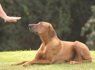 Aprendizaje de un Cachorro