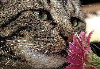 Las Flores de Bach tambien ayudan a las Mascotas