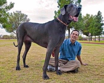 foto de los perros mas grandes del mundo