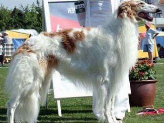Los Perros más Grandes del Mundo