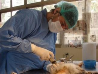 edad esterilizar una mascota