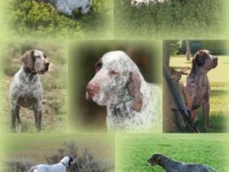 Cómo cuidar a un perro de caza