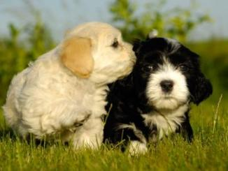 A Que Edad Podes Cruzar a Tu Perro