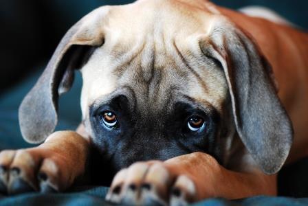Foto de La Mirada de los Perros y sus Mensajes