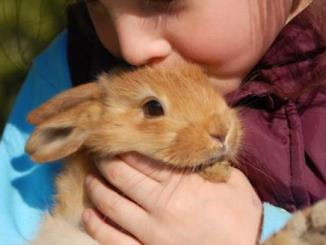 Foto de Se puede tener un Conejo como Mascota