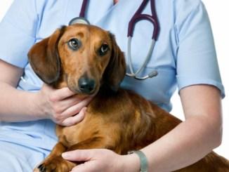 La realidad de las mascotas en Perú Algunos de los servicios veterinarios más importantes