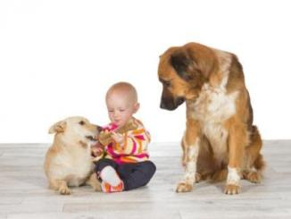 Foto de Pueden los perros sufrir celos