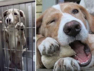 Antes y después de la adopción de mascotas