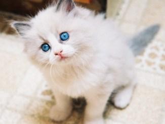 El primer día de su gato en el hogar: qué hacer