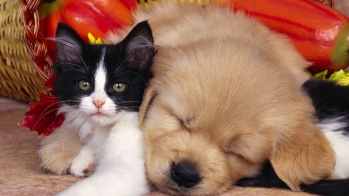 Por qué es importante adoptar una mascota